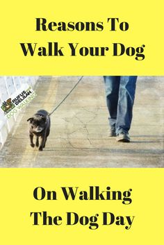 Check out our latest article where we highlighted some of the best reasons to partake in Walking The Dog Day.
