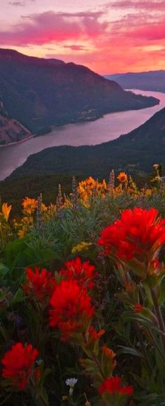The Columbia River Gorge from Dog Mountain in Washington, USA