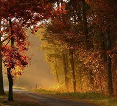 Autumn in Rotenburg, Germany | by Buridans Esel, via Flickr