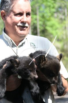 8-Week-Old Bear Cubs Examined By Florida Fish And Wildlife Biologists (PHOTOS)