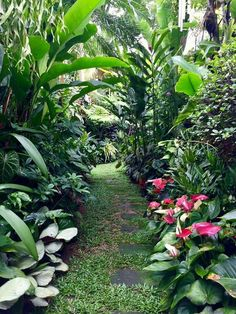 Tropical garden Ideas, tips and photos. Inspiration for your tropical landscaping. Tropical landscape plants, garden ideas and plans. Beautiful Gardens, Tropical Backyard, Backyard Garden, Tropical Garden Design, Backyard Landscaping, Jungle Gardens, Balinese Garden, Tropical Landscaping, Tropical Landscape Design