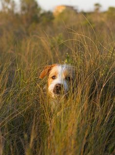© Allison Shamrell Photography | Happy National Mutt Day! #dogphotography #petphotoography