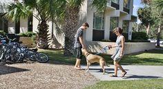 eckerd college dorms - Google Search Eckerd College, I School, South Carolina, Florida, Google Search, The Florida