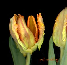 """My evil toxic twin ate too much sugar during this holiday period.  The """"good"""" me photographed parrot tulips."""