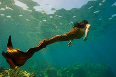 Little Mermaid Erg Mooie 06970 Mermaid Cove, Mermaid Tails, Mermaid Art, Ocean Pictures, Mermaid Pictures, Magical Creatures, Sea Creatures, Professional Mermaid, The Cardigans