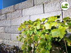 Das ReCon Stützwandsystem im Detail. So sehen die einzelnen Steine aus der Nähe betrachtet aus.  #Stützwand #Außenanlage #Hang #gartenleber #design Herbs, Blog, Fruit, Plants, Design, Benefits Of, Wedding Ideas, Pictures, Stones