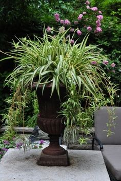 Urn with a spider plant… I need to do this with mine :)