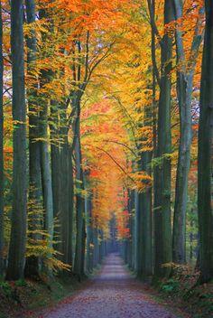 Take a peaceful walk...