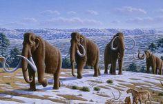 The signature animal of the Pleistocene era....