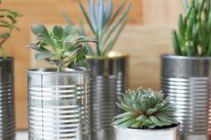 DIY succulent planters | mini succulents | soup can planters | cactus planters | DIY blog | easy DIY projects