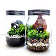 A tiny black bear is housed in this terrarium complete with a mountain landscape (typical of our national parks) with real, live moss plants. Mini Terrarium, Garden Terrarium, Mason Jar Terrarium, Cactus Terrarium, Mason Jar Crafts, Mason Jars, Mini Mundo, Park Landscape, Mountain Landscape