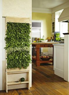 Gardenista Agrarian Contest Vertical Wall Garden:  Grand prize is the ultimate indoor herb garden. Designed and created by GroVert exclusively for Williams-Sonoma Agrarian, the Freestanding Vertical Garden features 40 planting cells and a moisture mat to evenly distribute water (a hidden collector tray catches excess water). Simply plant, water, and watch your bounty grow; 400$ at Williams-Sonoma.