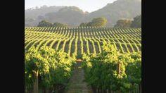 Steven Zoernack - Discusses Top Emerging Wine Regions in California https://finance.yahoo.com/news/steven-zoernack-discusses-top-emerging-200500462.html?utm_content=bufferd0c45&utm_medium=social&utm_source=pinterest.com&utm_campaign=buffer