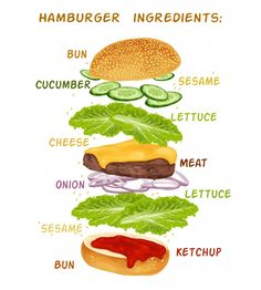 Hamburguer ingredients design Free Vector