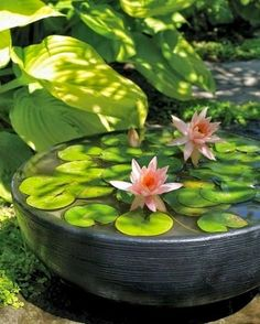 Patio Pond, Ponds Backyard, Backyard Landscaping, Landscaping Ideas, Container Pond, Container Water Gardens, Small Water Gardens, Water Plants For Ponds, Plants For Small Gardens