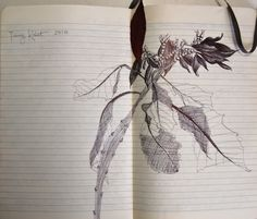 Flowers on Popa Mountain, Burma (Ink on paper)
