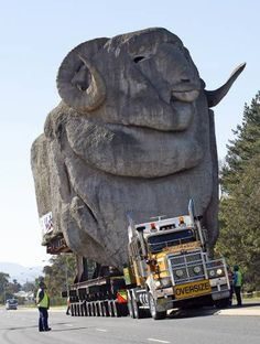 LIKE Progressive Truck Driving School: http://www.facebook.com/cdltruck #trucking #truck #driver   The Big Merino on the move Goulburn New South Wales