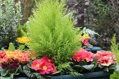 www.fleursaubalcon.com Un concentré de printemps sur le balcon ! Jardinière livrée à domicile.