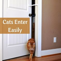 Door Buddy Door Latch to Dog Proof Litter Box. Easy Cat Access ...