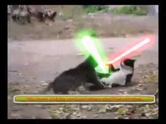 Jedi cat vs Sith cat