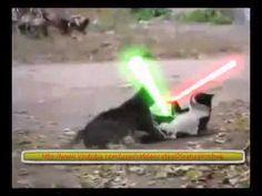 Jedi cat vs Sith cat