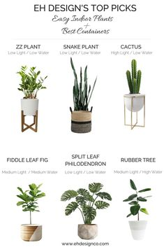 Easy Indoor Plant Guide and Best Containers EH Design indoorplants plants plantguide #