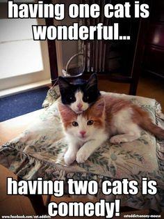 How true! Comedy Cat TV....