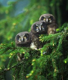 dark colors ... and beautiful little owls
