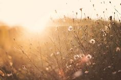 by Melissa Emiko via Flickr #light #sun #nature