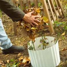 Check off these chores and get your lawn and gardens ready for winter! Autumn Flowering Plants, Fall Plants, Herb Garden, Lawn And Garden, Flower Landscape, Autumn Garden, Houseplants, Beautiful Gardens, Gardening Tips