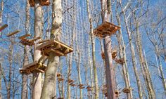 Go ape in Pittsburgh's North Park at the seven-acre Go Ape! Learn about the experience, age requirements, and more. Go Ape, Wind Chimes, Pittsburgh, Adventure, Zip Lining, Outdoor Decor, Engineering, Bucket, Design