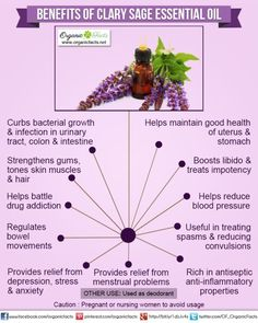 ☆☆ Cannot wait to get the Clary Sage oil I ordered! ☆☆ Health Benefits of Clary Sage Essential Oil Clary Sage Essential Oil, Doterra Essential Oils, Natural Essential Oils, Essential Oil Blends, Young Living Oils, Young Living Essential Oils, Young Living Clary Sage, Oil Benefits, Sage Health Benefits