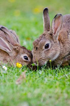 rabbit #bunny