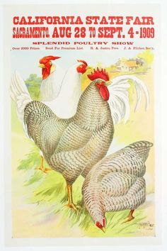 1909 California State Fair... with a wonderful chicken!