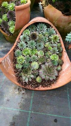 Succulents cascading from a pot!!