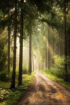 ~~Path Of Dreams   beautiful warm sunrise light falls upon a forest path   by Marco Heisler~~