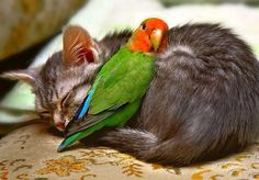 25 unlikely animal friends sleeping together   Awesomelycute - Cute Kittens, Cute Puppies, Cute Animals, Cute Babies and Cute Things in General