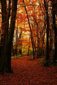 autumn colours | by Barry Kieran Photography