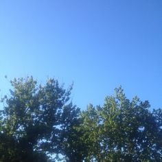 Afternoon sky #sky #trees #nature