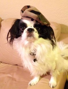 Dog Beret, Army Camouflage, Small, Dog Hat