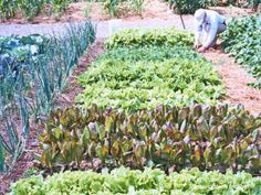 Tending A Vegetable Garden - Photo: © Marie Iannotti - #7.  Tending Your Vegetable Garden - Now we're ready to tackle more practical matters. A vegetable garden requires regular maintenance. Vegetables won't wait until it's convenient for you to water them, stake them or harvest them.
