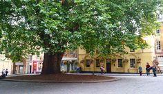 Uma árvore de idade e respeito na fofa cidade de #Bath  . Recomendo o ig @nomeiodomundo com fotos lindonas! .  Corre lá no blog pra  de 80 dicas sobre Londres e região! . . . . . . . #blogdeviagem #photosofbritain #visitlondon #uk #eurotrip #photooftheday #wanderlust #travelblogger  #travelpics #loucosporviagens #travelling #beautifulday #tgif #viagem #viagemeturismo #travelgram #worldplaces #sobrelugares #vocenomundo #digitalnomad #romanbaths #architecture #england #uktrip #bestofengland…