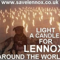 Lennox -the dog that the world tries to save- versus Belfast city council.