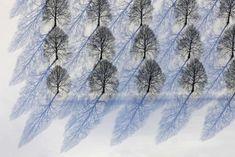 Blue Shadows of Barren Winter Trees - Klaus Leidorf