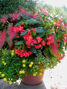 Part shade: caladiums, pink dragonwing begonias, trailing mintleaf (plectranthus), lantana