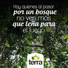 En #TerraPyJ al pasar por un bosque, simplemente nos detenemos, admiramos su grandeza y seguimos ¿y tu?