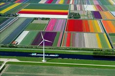 Aerial shot of a tulip farm in the Netherlands...wow! <3