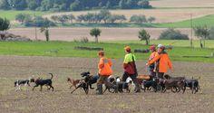 Polowania z profesjonalnymi podkładaczami przebiegają sprawnie, bo zarówno przewodnicy, jak i psy dobrze znają się na swojej pracy.