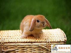 Google Image Result for http://www.hare-hill.co.uk/pics/bunnies/previous%2520bunnies/picnicbunny.jpg