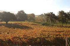 Little Vineyards Family Winery, Sonoma Valley.